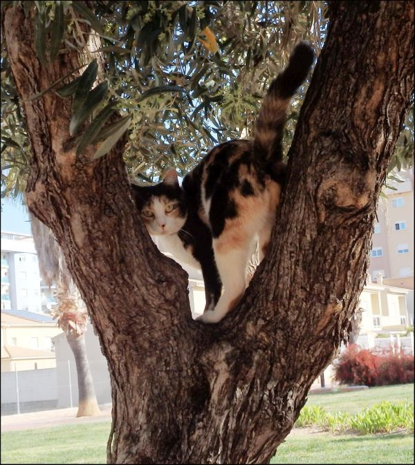 Cat in The Olive Tree