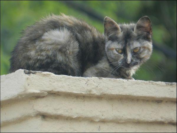 Kitten on The Roof