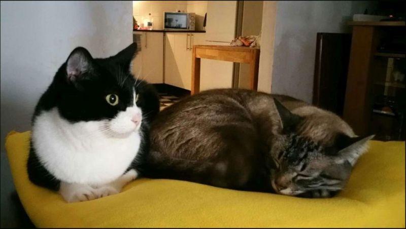 Felix & Kirin