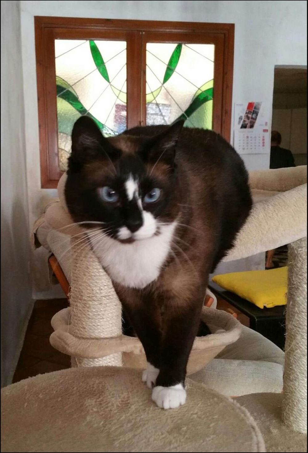 Xena on the Cat Tower