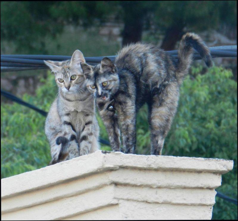 Kittens on The Neighbor
