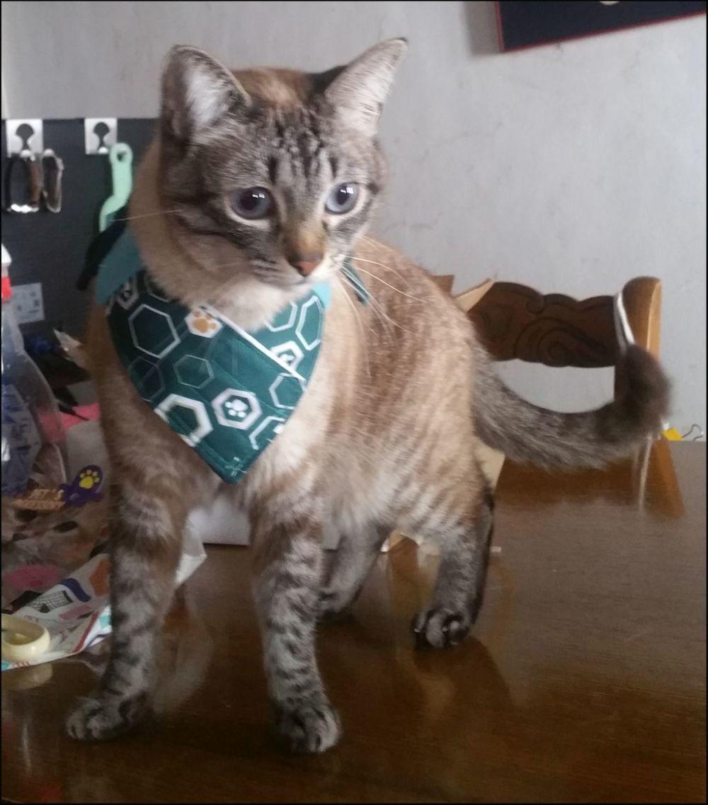 Kirin The Birthday Boy Cat