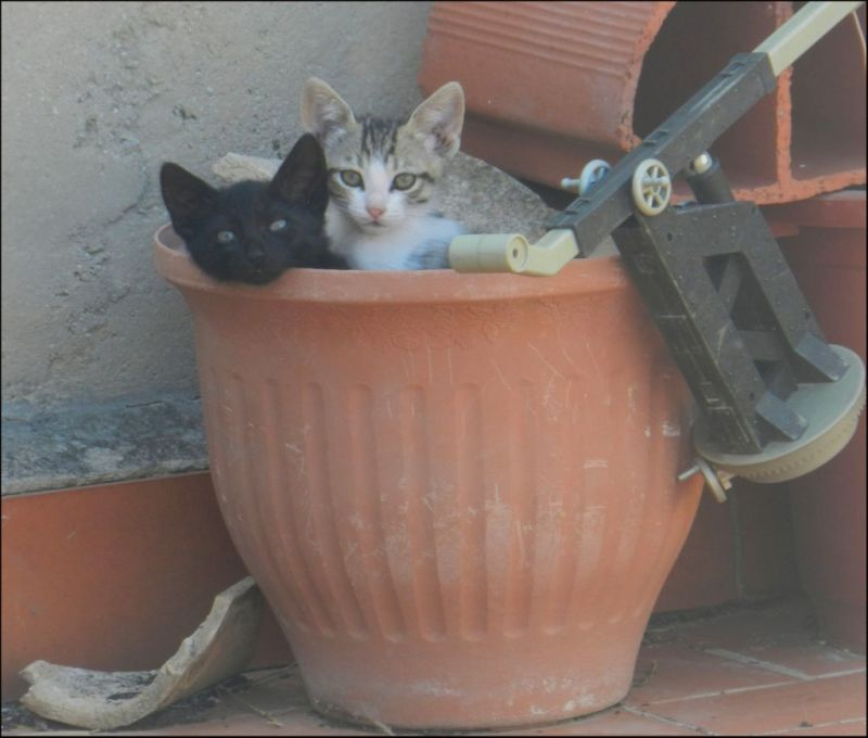 kittens in The Flower Pot