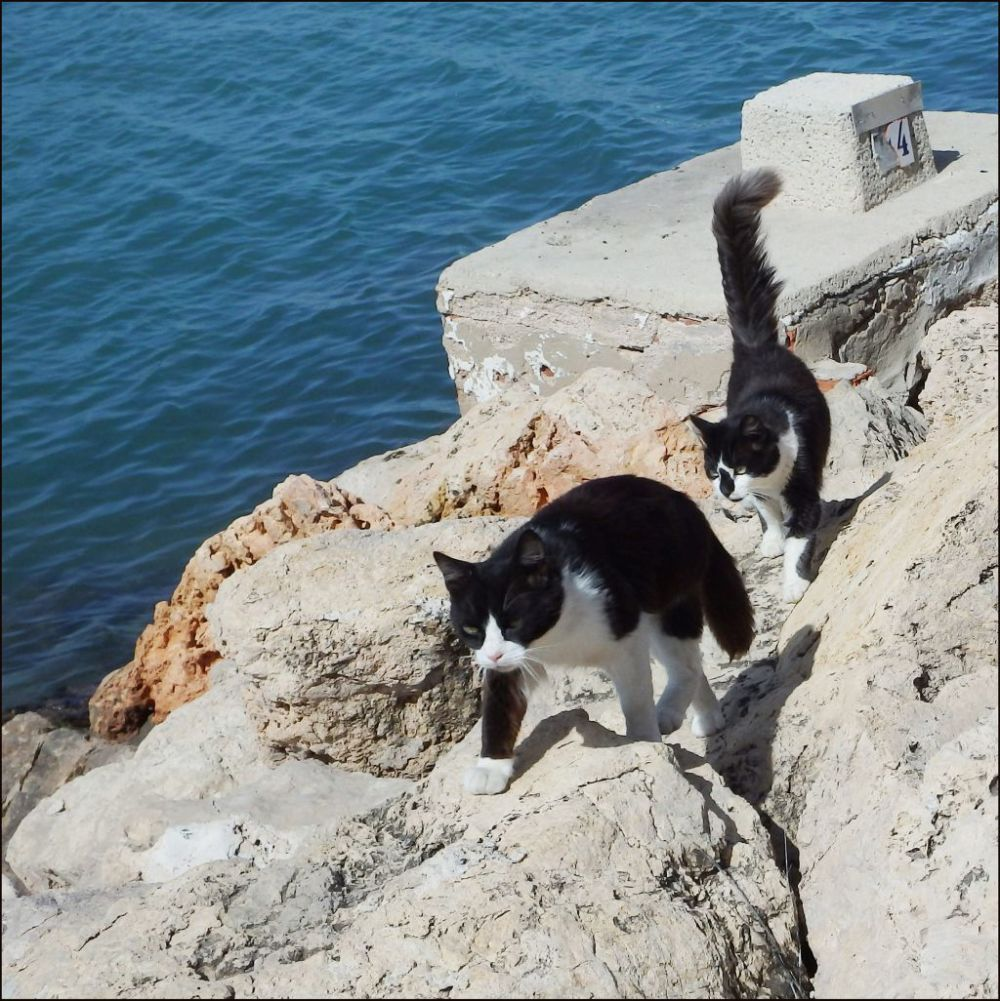 Cats in The Fishing Port