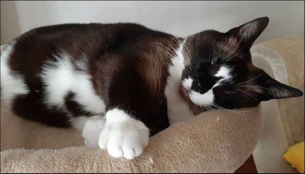 Xena's Sleeping Posture