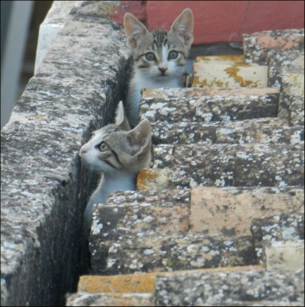 Kittens at My Neighbour'a Roof
