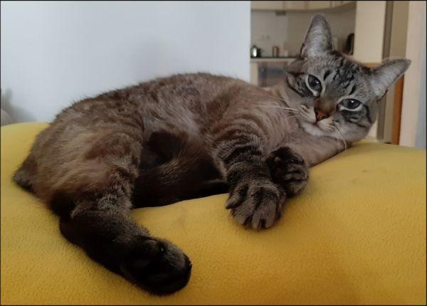 Kirin's Favourite Yellow Cushion