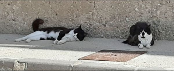 Cats in The Shade
