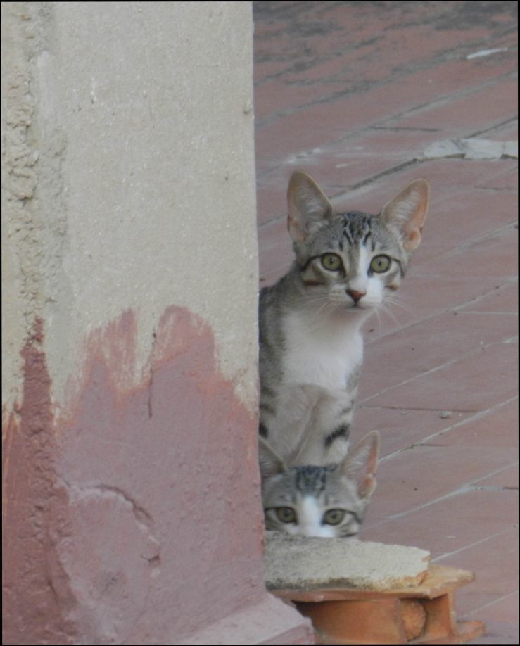 Kittens at My Neighbour'a RoofTerrace