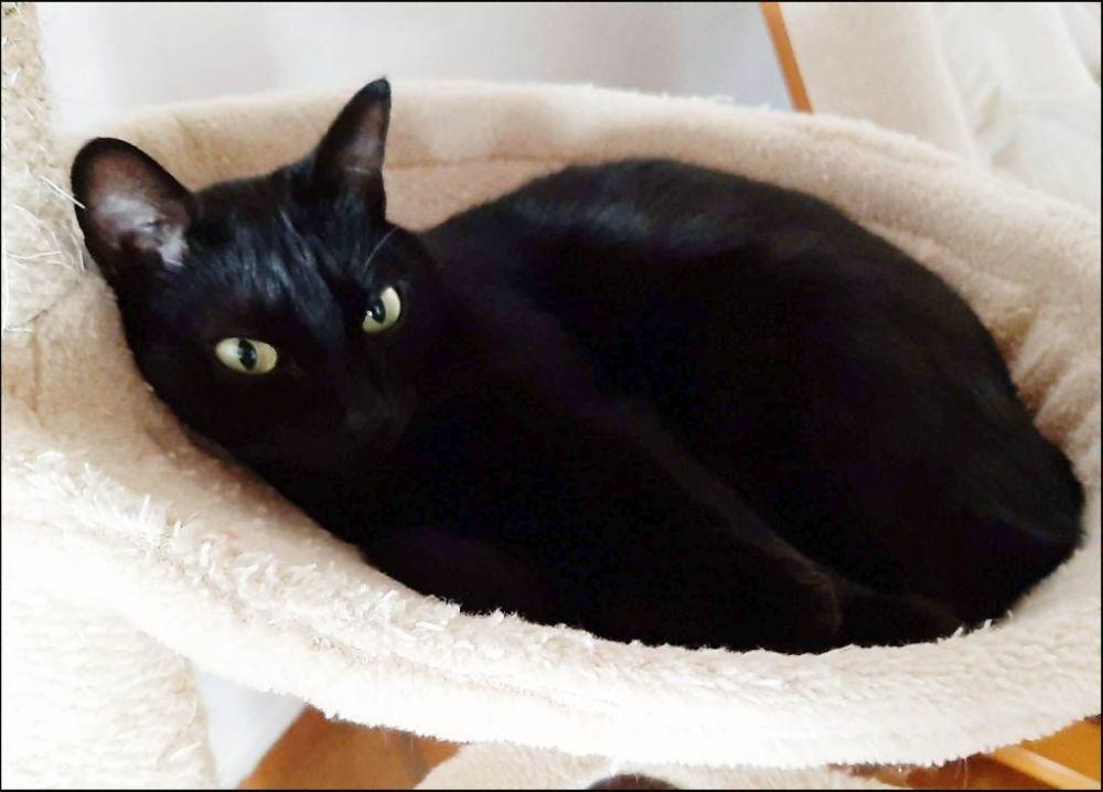 Birthday Cat Mei (^・ω・^✿)