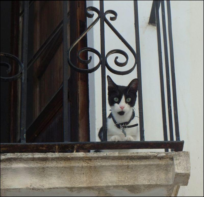 Kitten on the Balcony Outlook