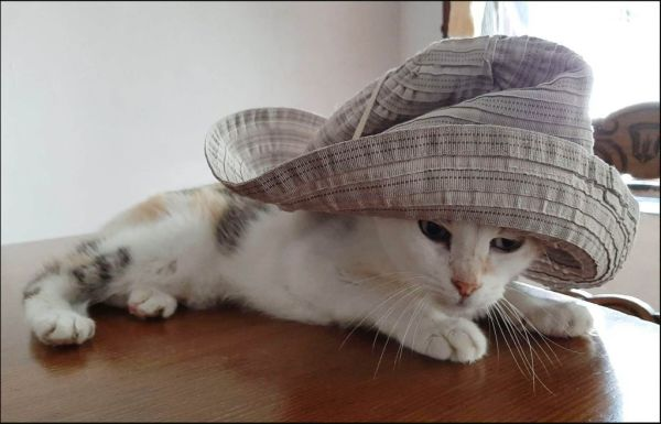 Gimo in The Hat