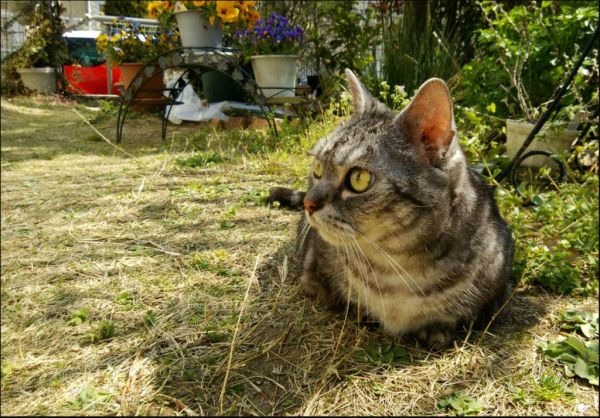 Tosca chan in The Garden