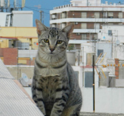 Kitten in My RoofTerrace