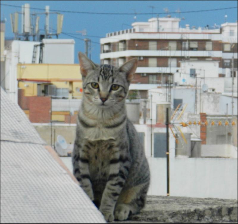 Kitten in My RoofTerrace
