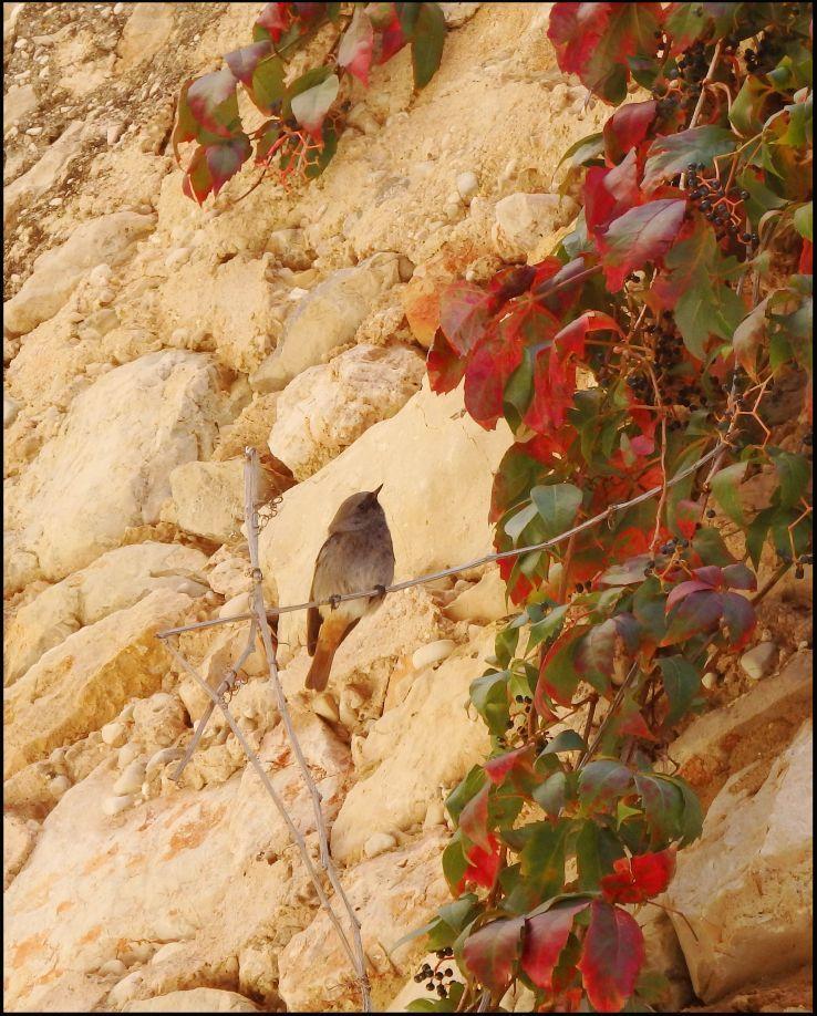 Autumn Leaves & Wild Bird