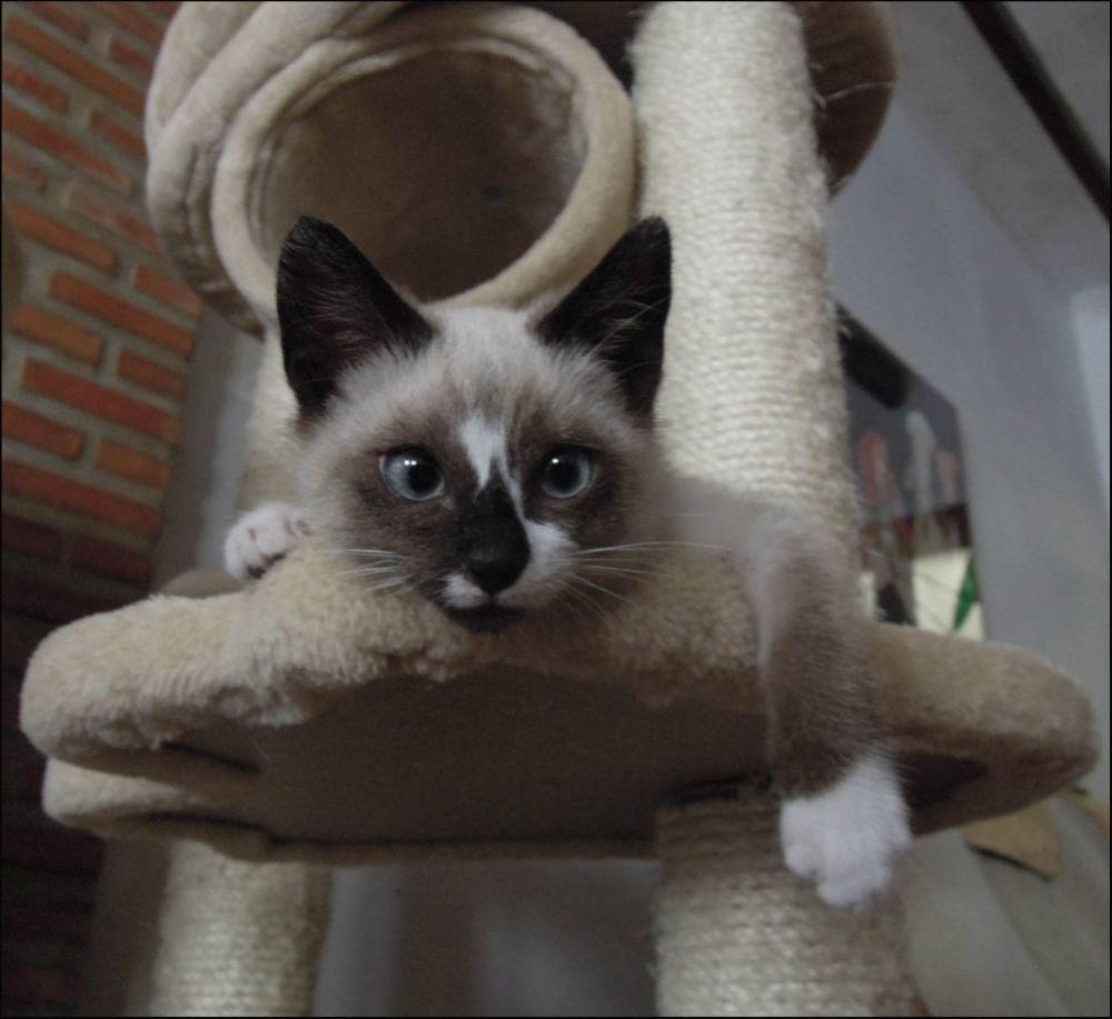 Xena as a Kitten