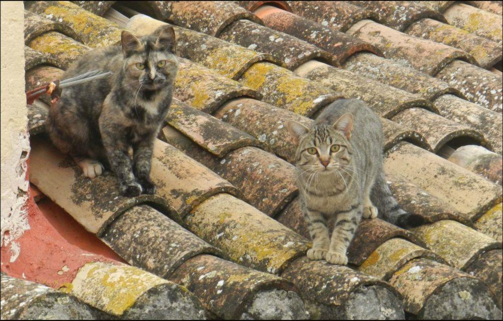 Kittens on The Terracotta Roof