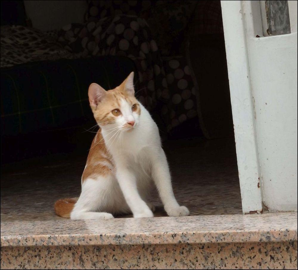 Pancho as a Kittenhood