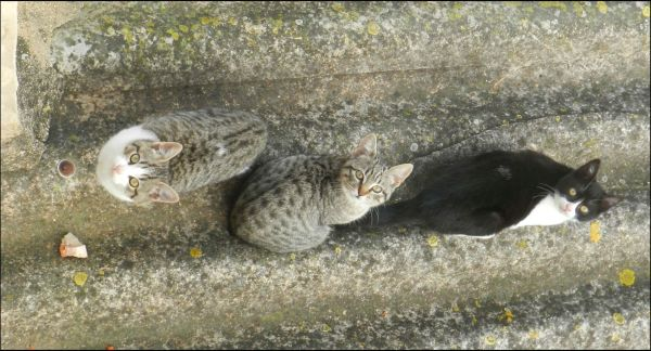 Kittens on The Folded‐Plate Roof