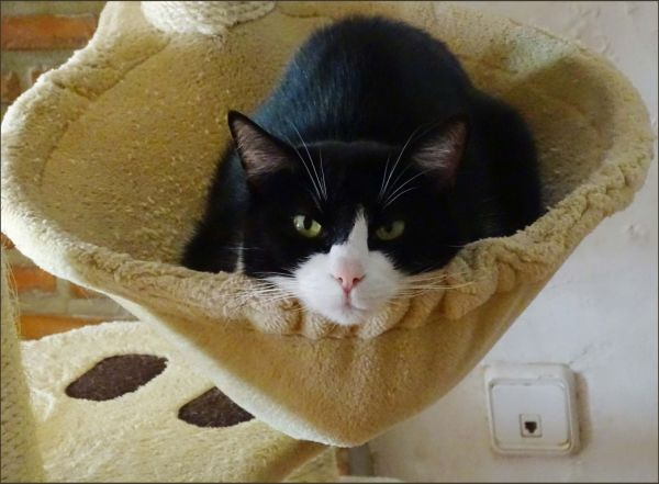 Felix in The Cat Tower Bed for a Nap