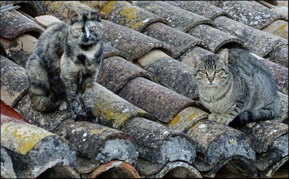 Kittens on The Old Terracotta Roof Tiles