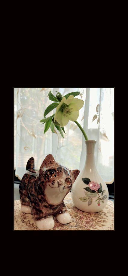 Pudding Chan & Yellow Christmas Rose
