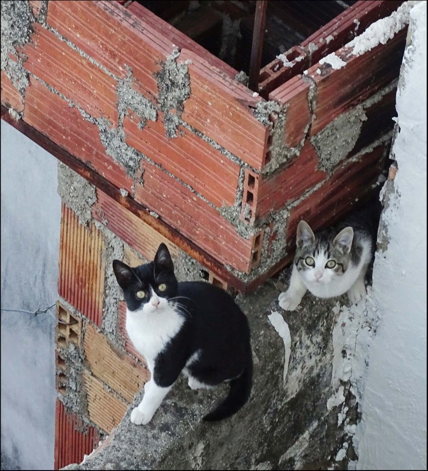 Kittens on The Concrete Block Wall