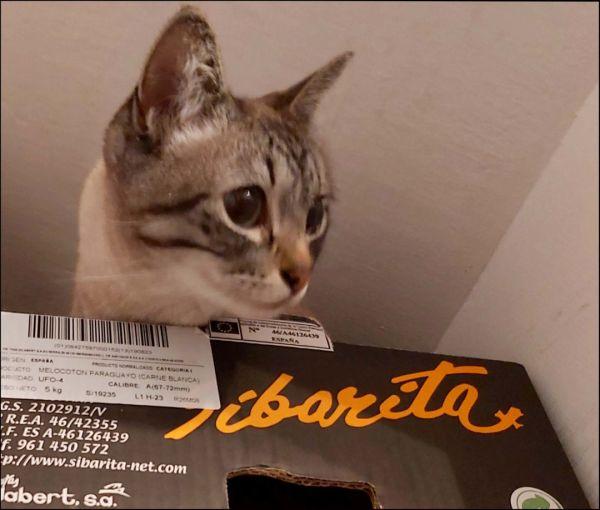Kirin in The Cardboard Box on The Wooden Shelf