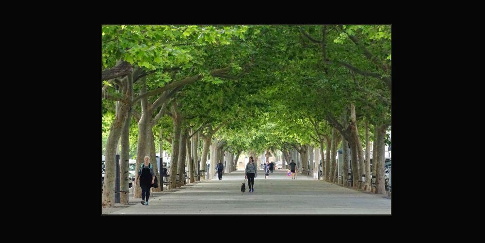 Fresh Verdure Trees Promenade in Oliva Town