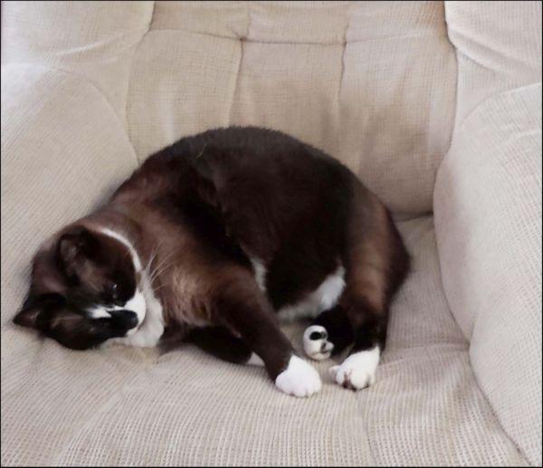 Xena in Her Favorite Sofa