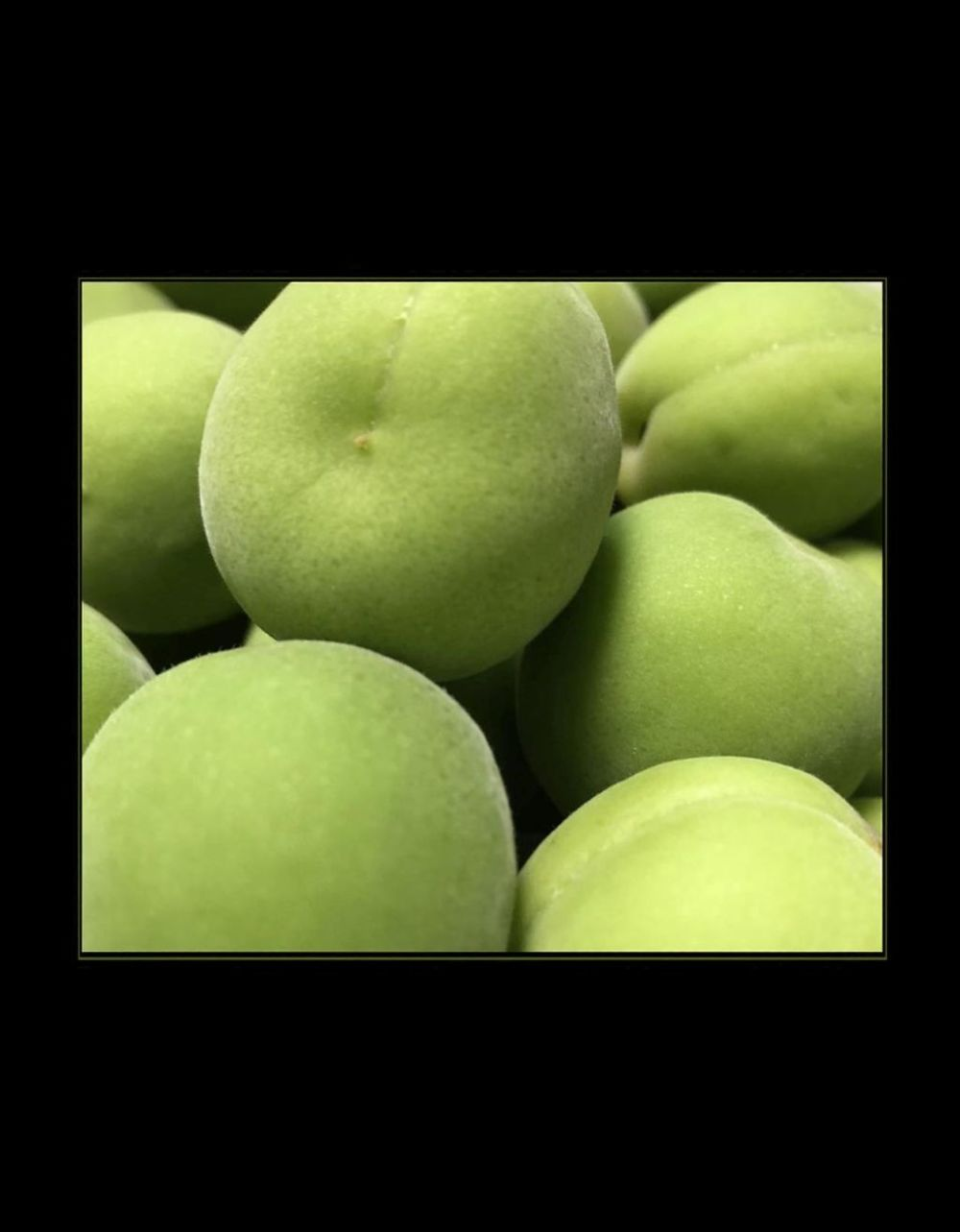 Aoume  -  Japanese Green Plum