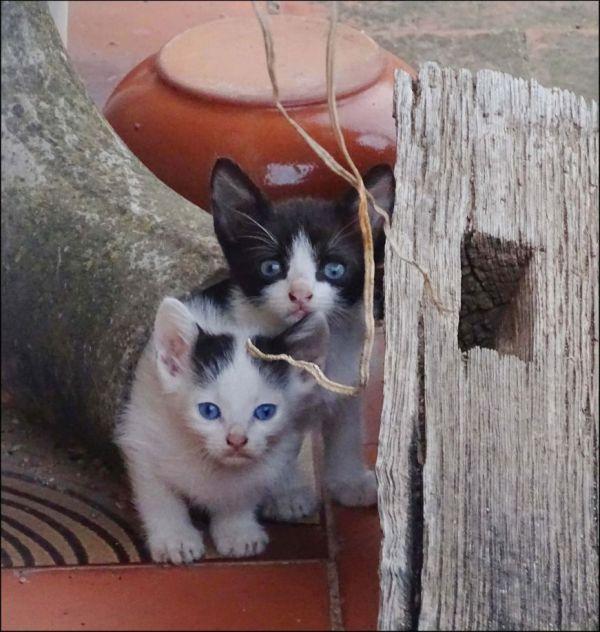 Kittens in The Next‐Door Neighbor's Garden