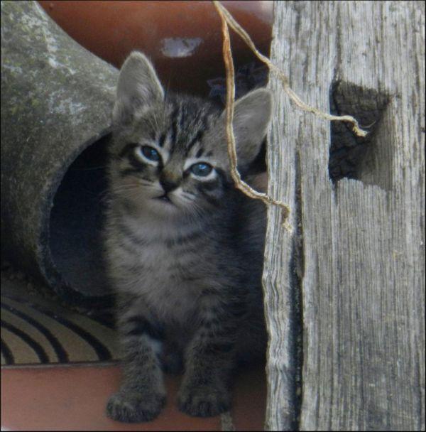 Kitten in The Next‐Door Neighbor's Garden