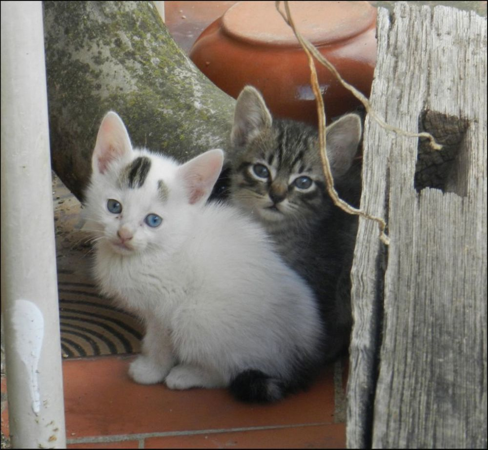 Kittens in The Next‐Door Neighbor's Garden