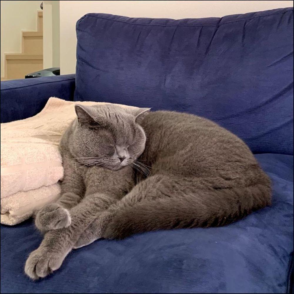 Buri chan  - an Afternoon Nap