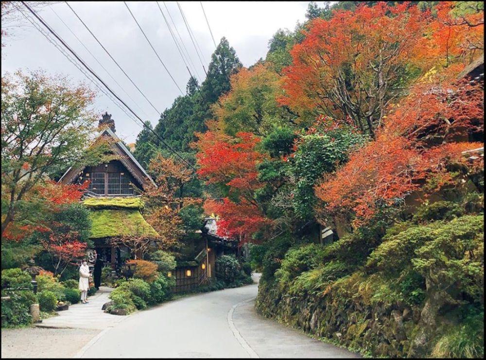 Autumn Leaves (Momiji) Festival