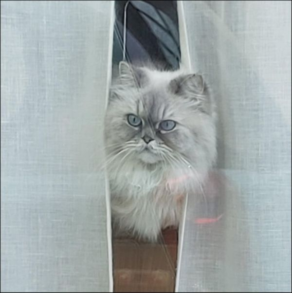 Cat Behind the Window