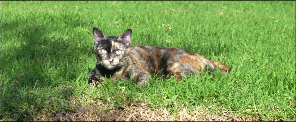 Sunbathing Cat in The Grass