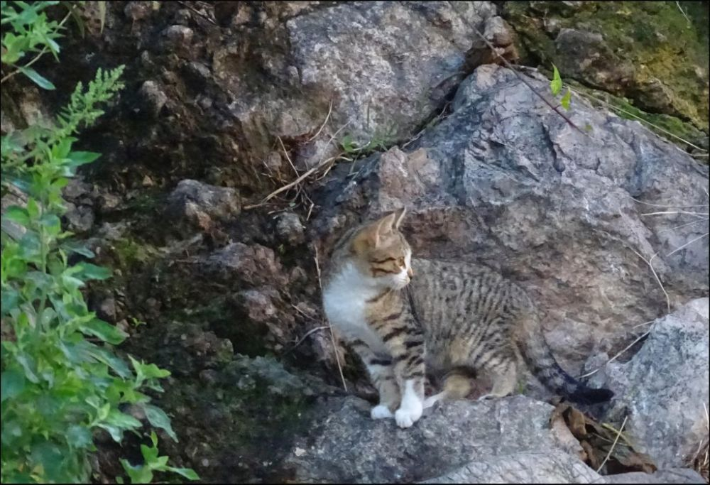 Kitten at The Foot of A Mountain