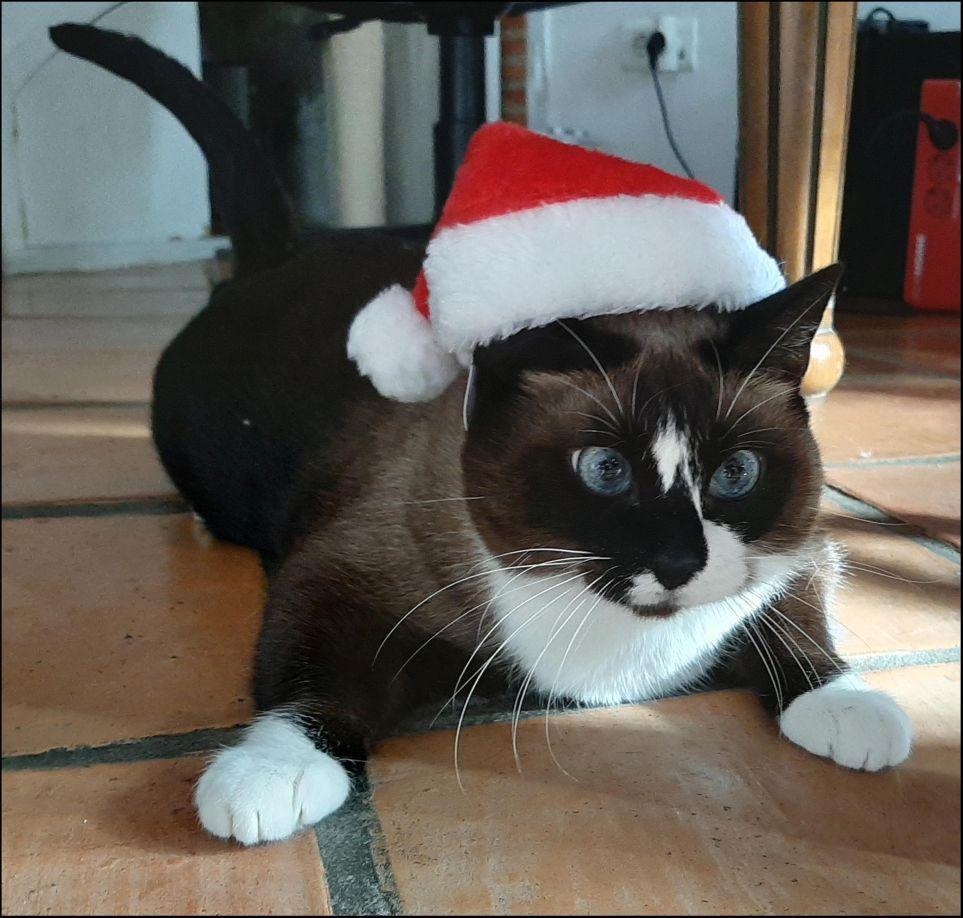 Santa Cat Xena