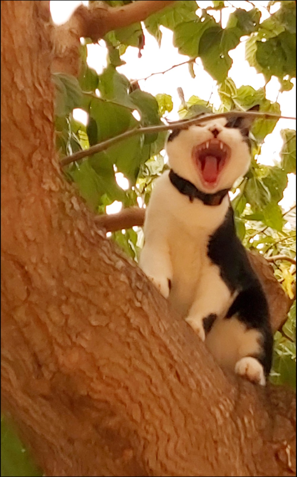 Cat onThe Tree