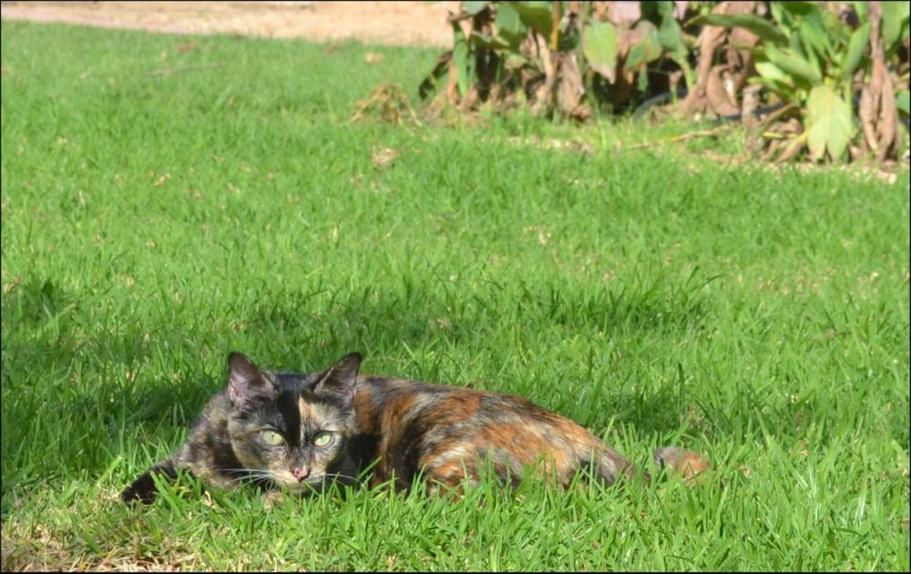Cat Lying in The Green Grass in The Garden