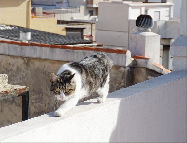 Cat on The Rooftop Terrace