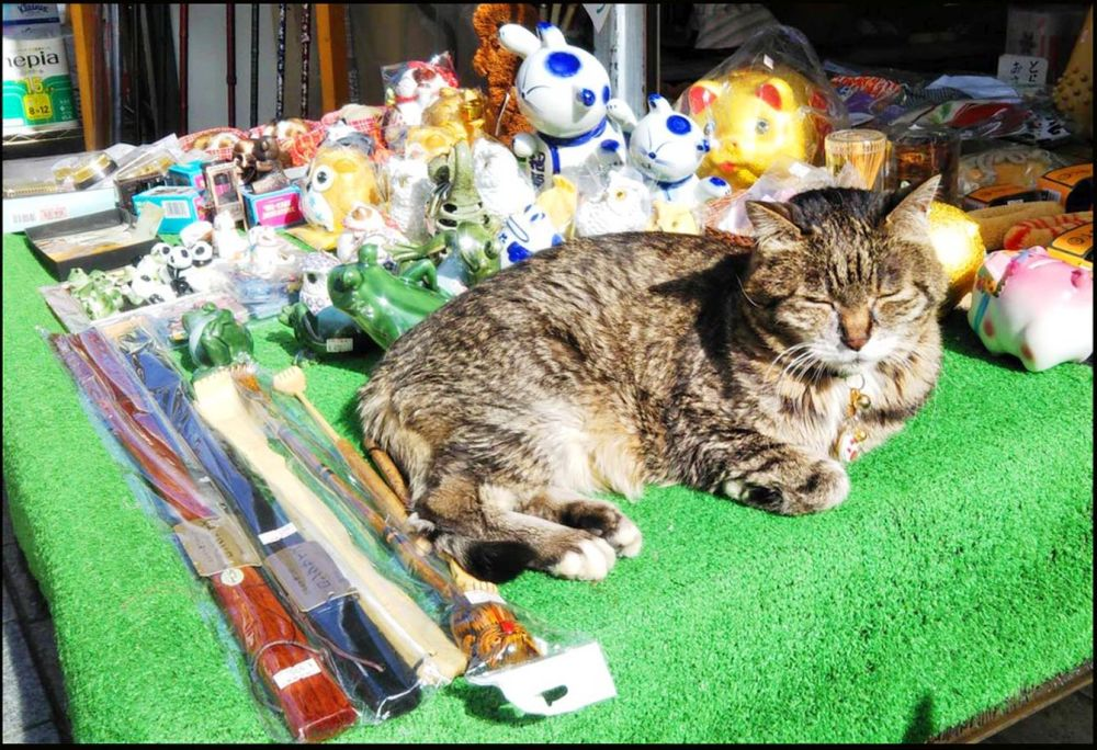 Cat Day in Japan   Toraji at a Convenience Store