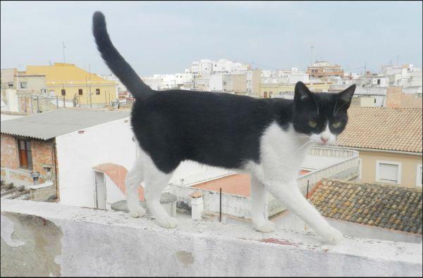 Kitten Walking on The Rooftop Terrace