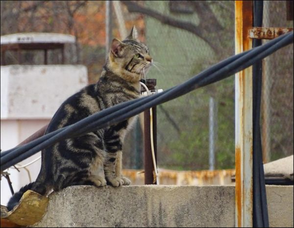 Cat by The Conduit Tubes