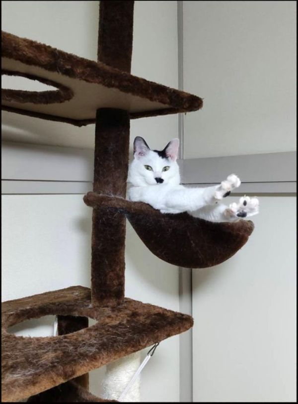 Kee Chan in The Big Cat Tower Bed