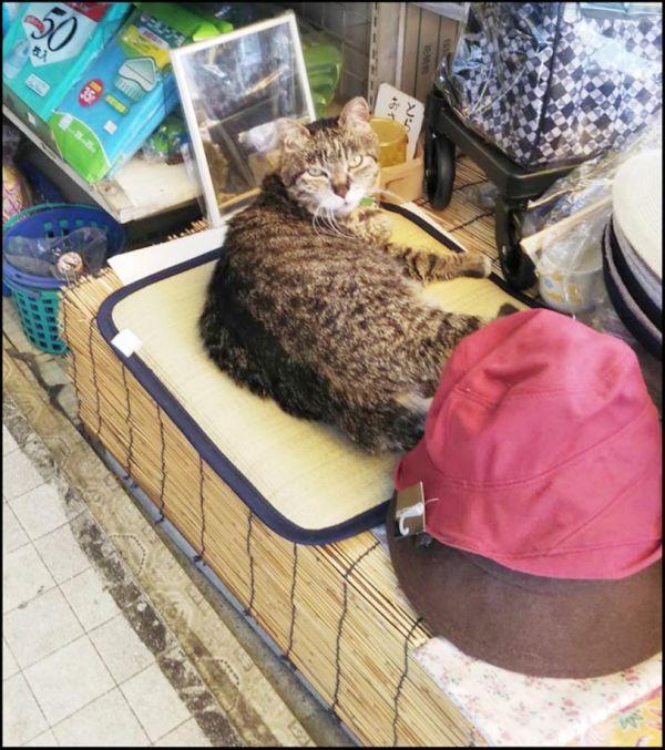 Toraji kun in The Convenience Store