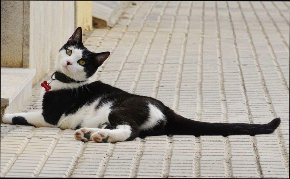 House Cat Lying on Stone Pavement
